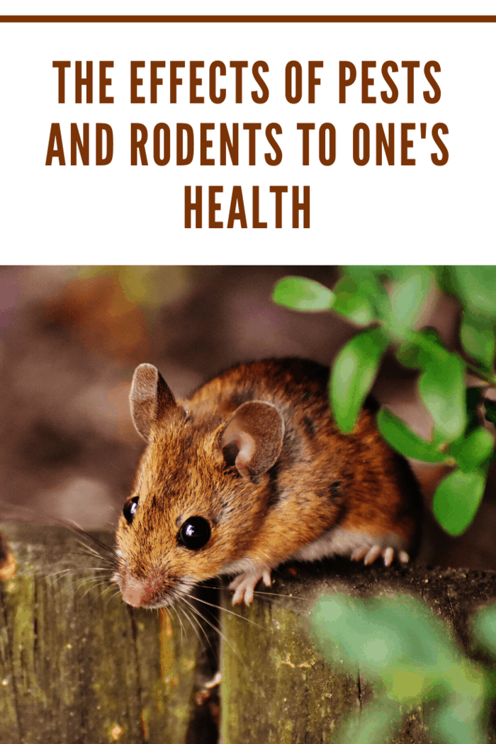 how exactly can these unpleasant creatures harm your health? Below are the effects of pests on one's health.