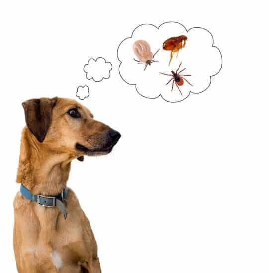 This list will provide you with some solid remedies to make your home free from fleas and regain your peace and comfort: