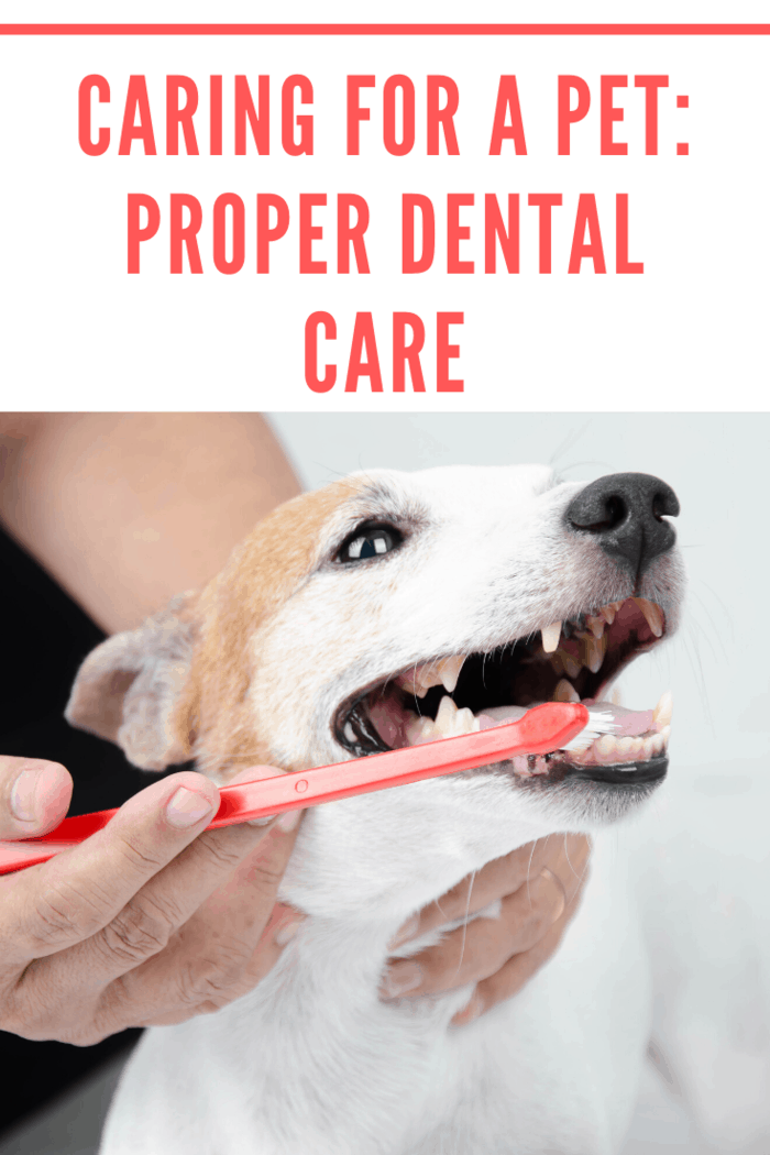 All pet parents should take care of their pet's hygiene, especially dental health.
