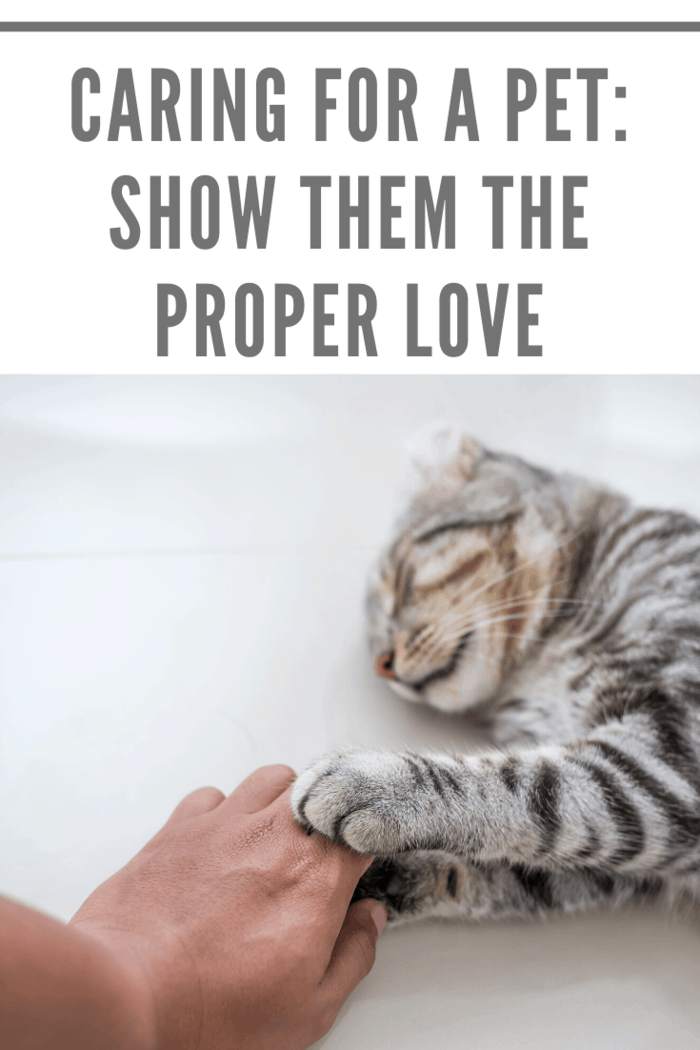 Love is what your relationship with your pet is all about.