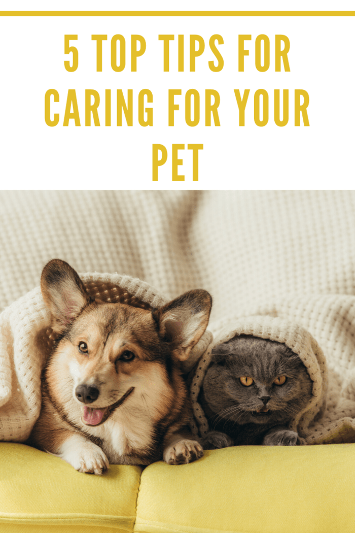 Are you searching for ways you can take care of your pets and full fill their needs? Look no further.