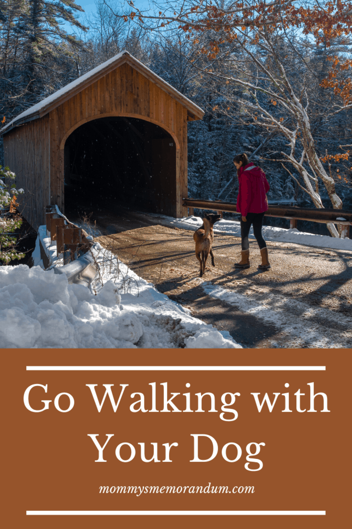 9 Fun Activities for Dogs Don't let a little bit of cold or snow stop you from walking your dog this winter.