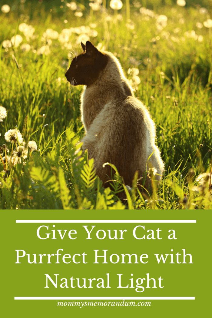 Maybe you cannot change the look of your house, or maybe you can, in any case, natural light is a cat's best friend.