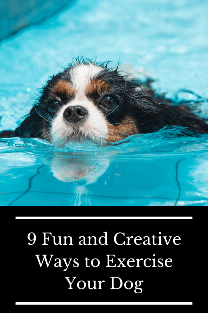Not all dogs love to swim, but it's important that your pup at least knows how.