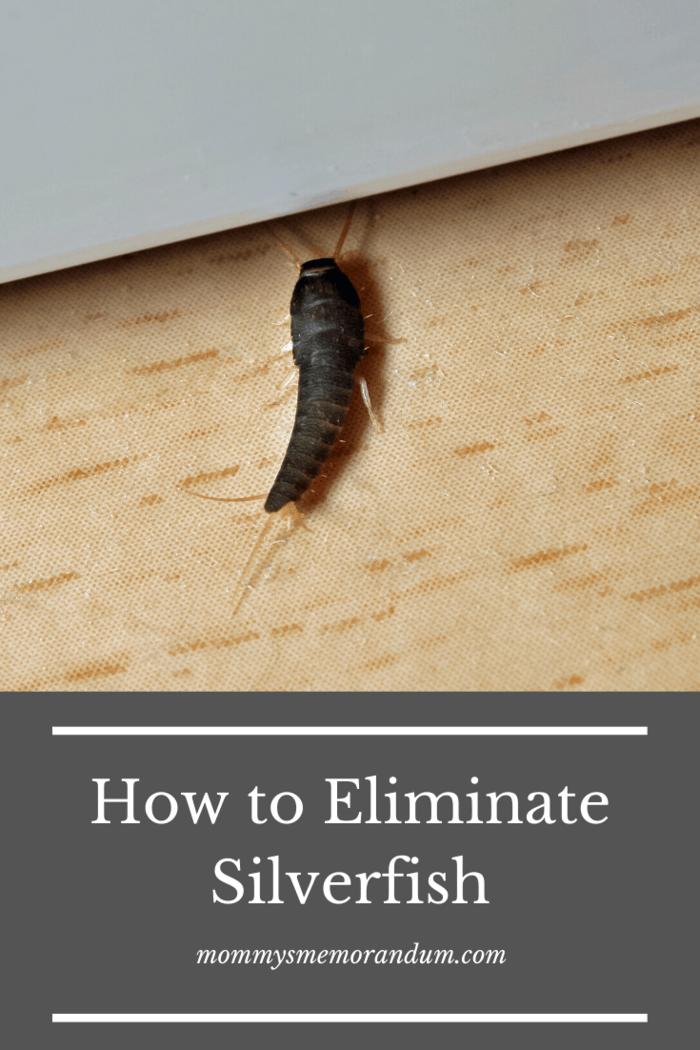 The silverfish will eat the poisoned paper and directly contact the boric acid powder, and this will cause their skin to dry out.
