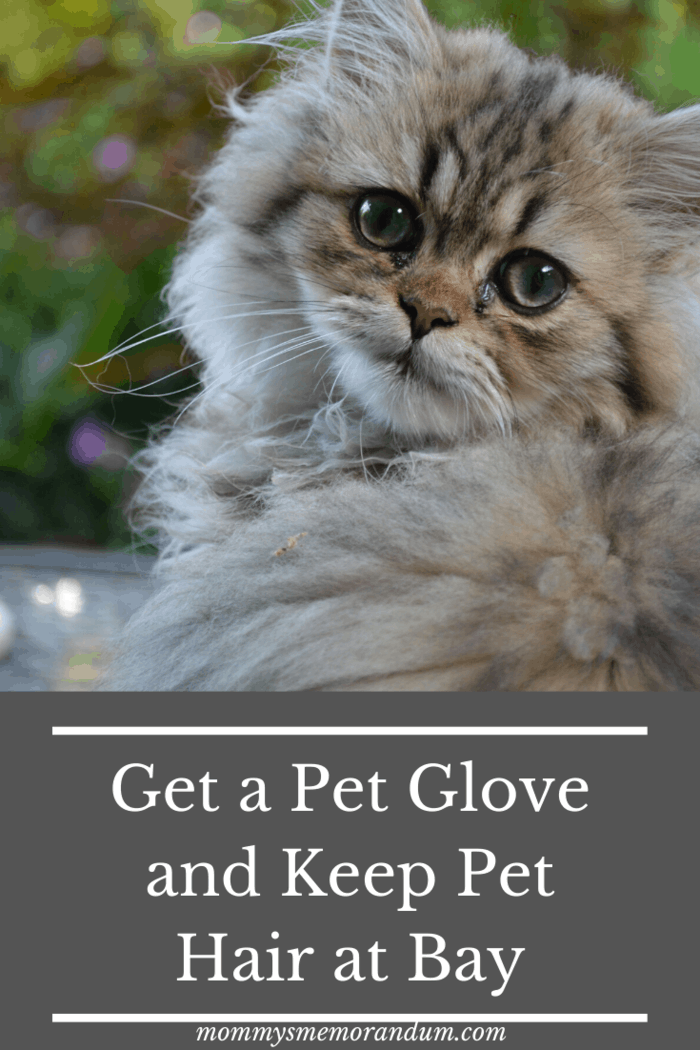 best pet gifts Fur can be one of the major hurdles to the experience of owning one.