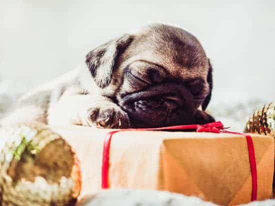 Your pet is part of your family. You might love them so much that you can't help but buy them pet gifts at every opportunity. Here are our suggestions.