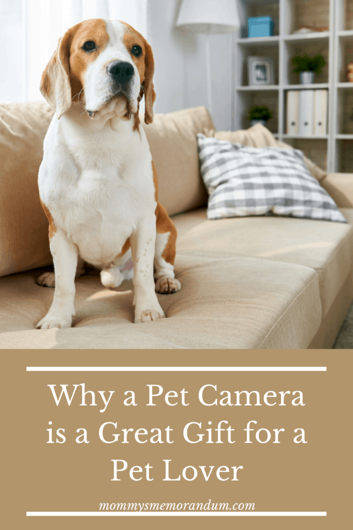 Best Pet Gifts. Pet Camera. These handy gizmos do exactly what you'd expect of them: record your animals while you're out.