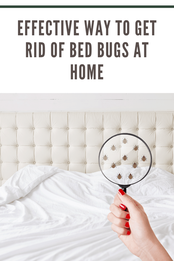 Some of the hiding places that you can find the bedbugs include in the baseboards, in bed cracks, in furniture joints or cracks, between cushions or under the mattresses.