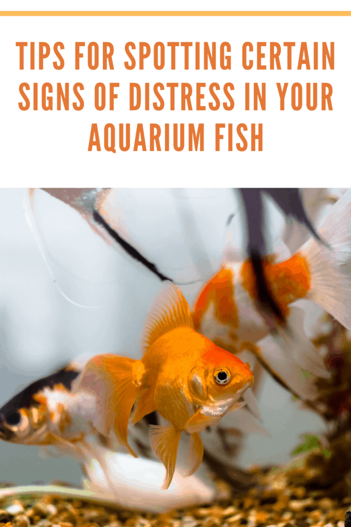When water chemistry in your aquarium becomes unstable, not only does it become stressful to the fish, but any severe or sudden water chemistry changes might be traumatic.