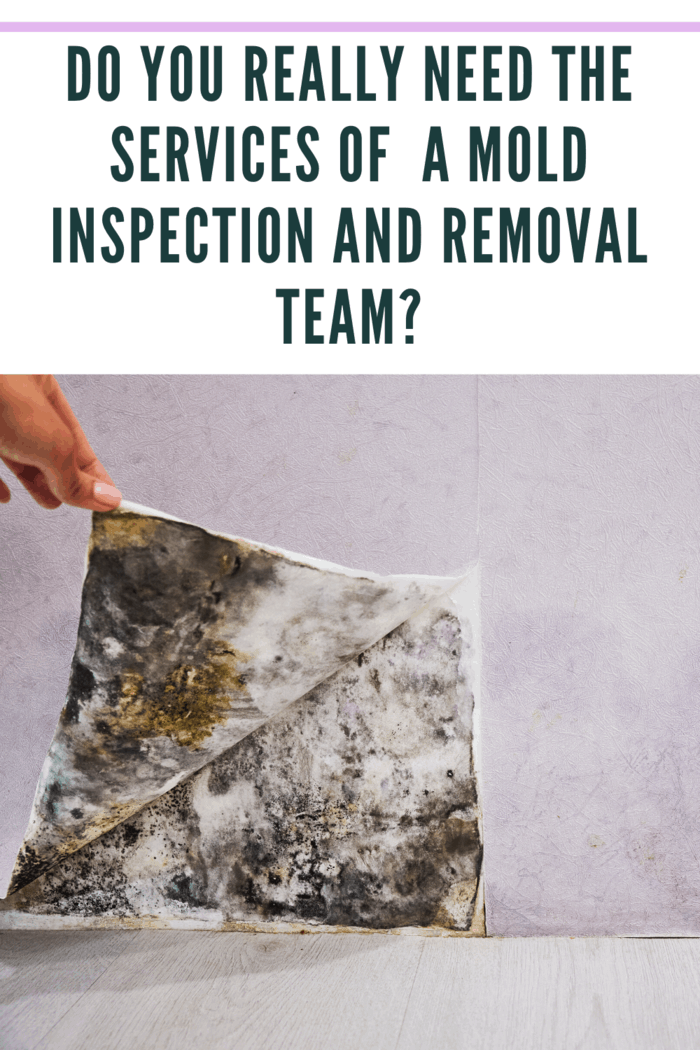 If you already see the presence of mold, it is a waste of time and money to do extra testing