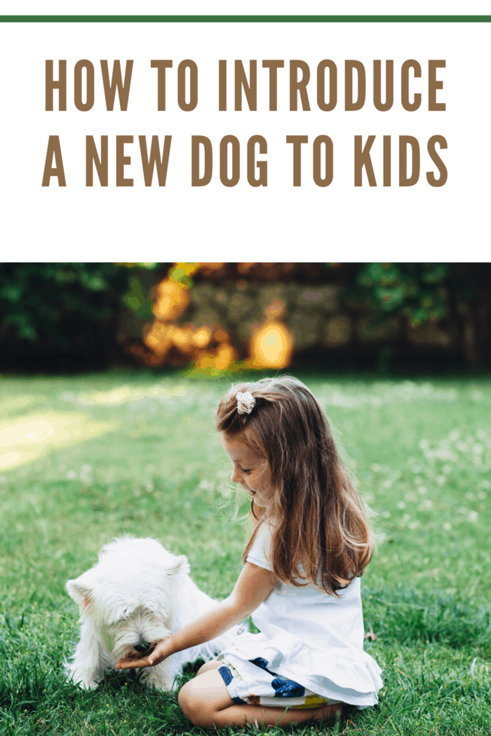 little girl on grass with white dog