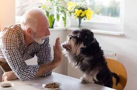 dog high fiving owner at table
