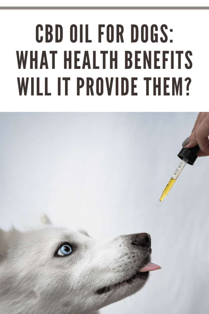 CBD Oil For Dogs_ What Health Benefits Will It Provide Them_