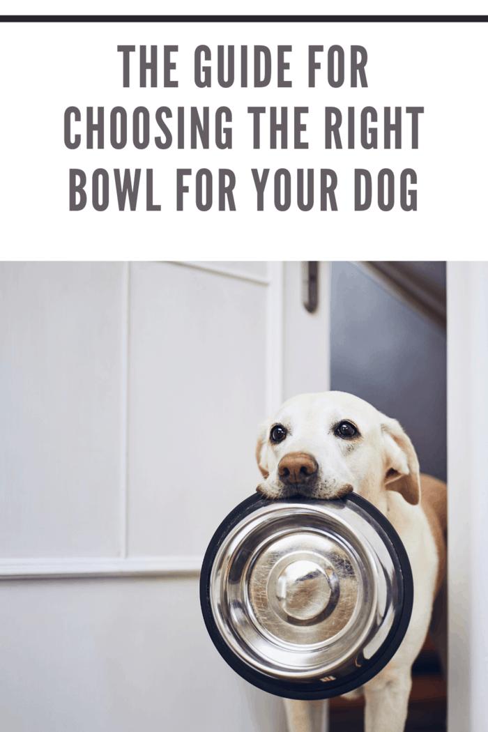choosing the right dog bowl