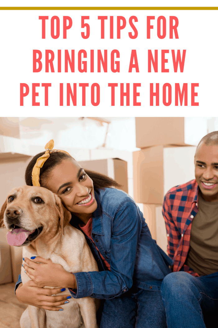 Here are five tips to help you make your home ready for such a momentous occasion of bringing a new pet into the home.mit