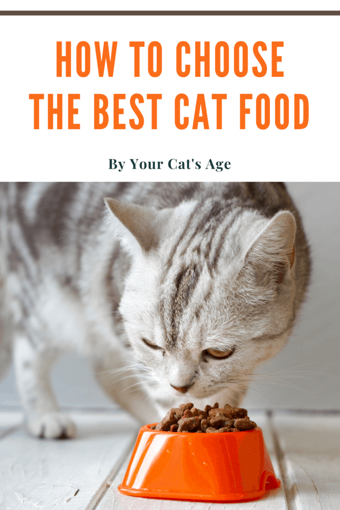 white cat with black stripes eating best cat food for its age