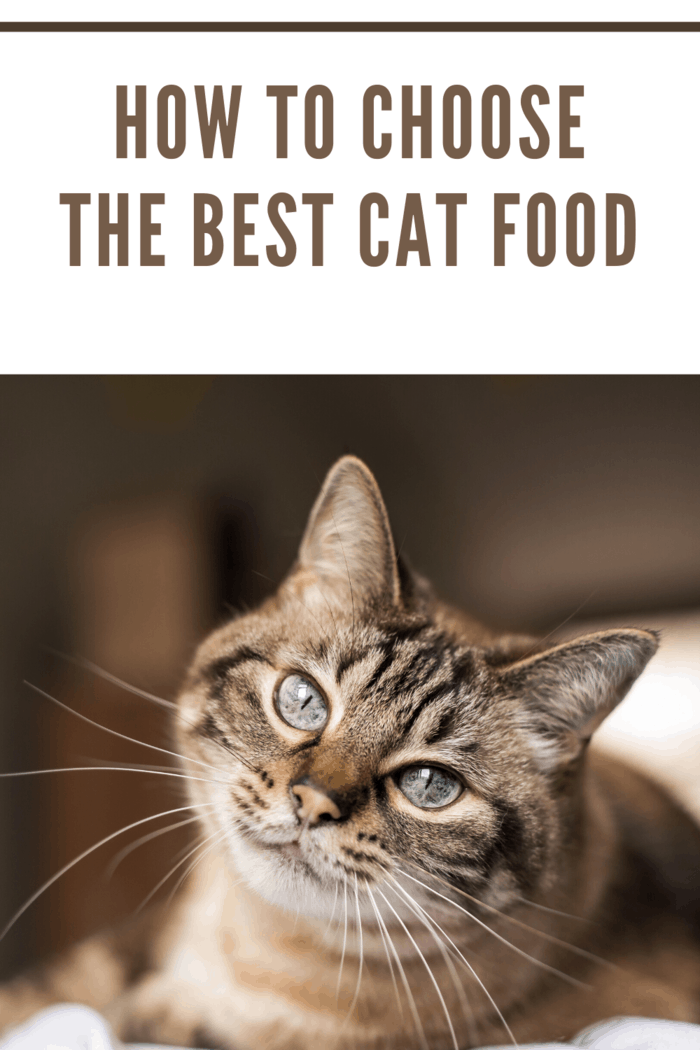 How to Choose the Best Cat Food (3)