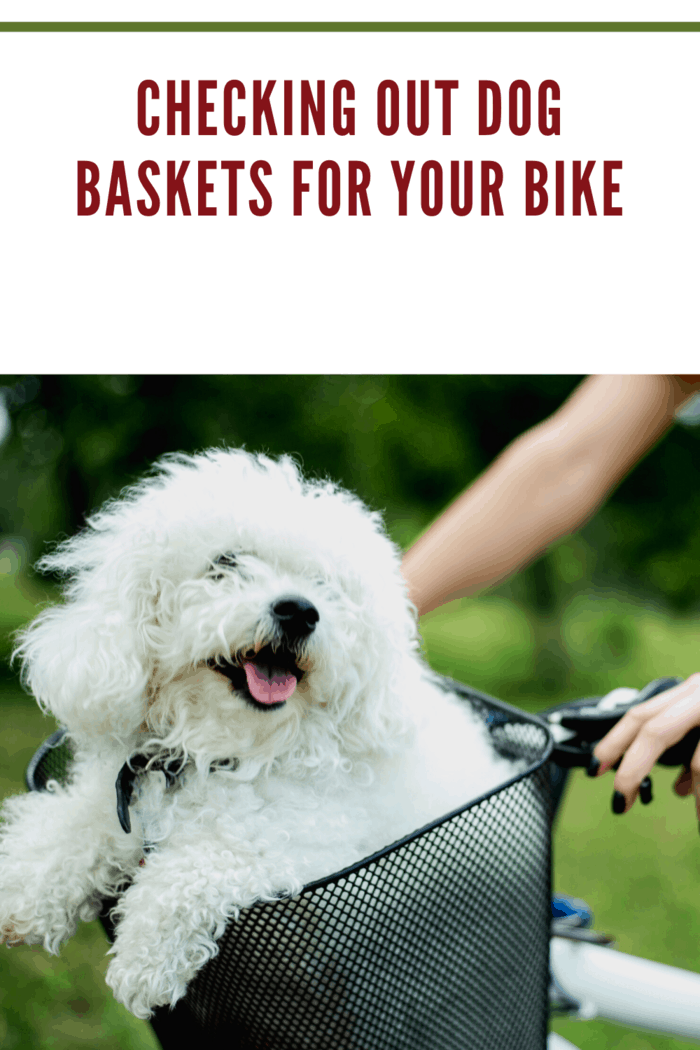 white dog in black bike basket