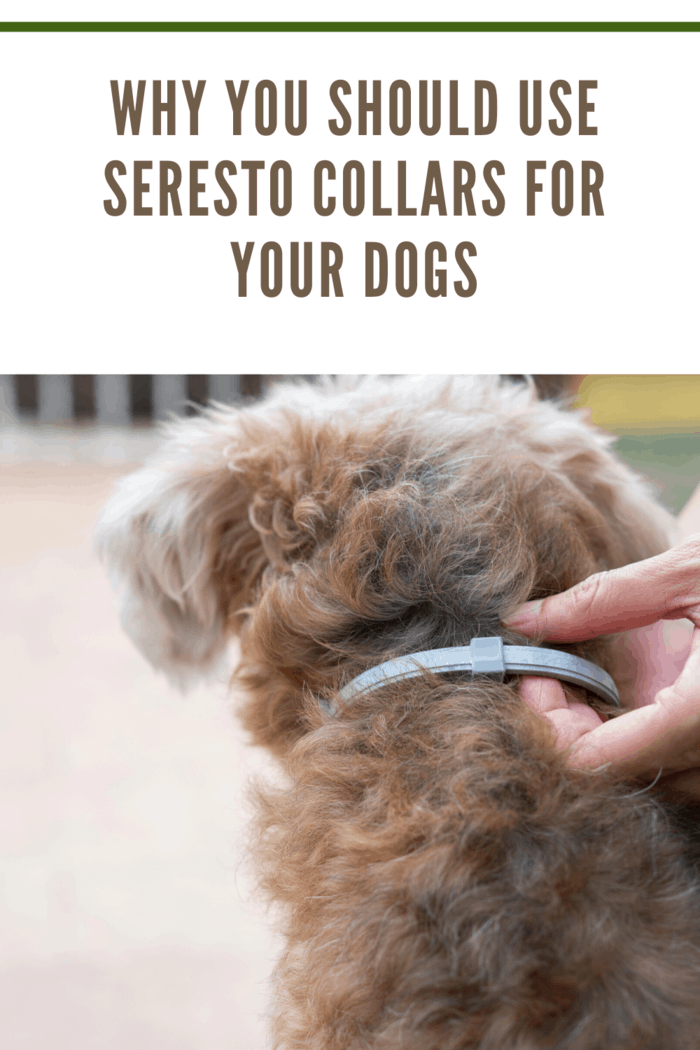 dog wearing a seresto collar for dog to kill and repel tick and flea