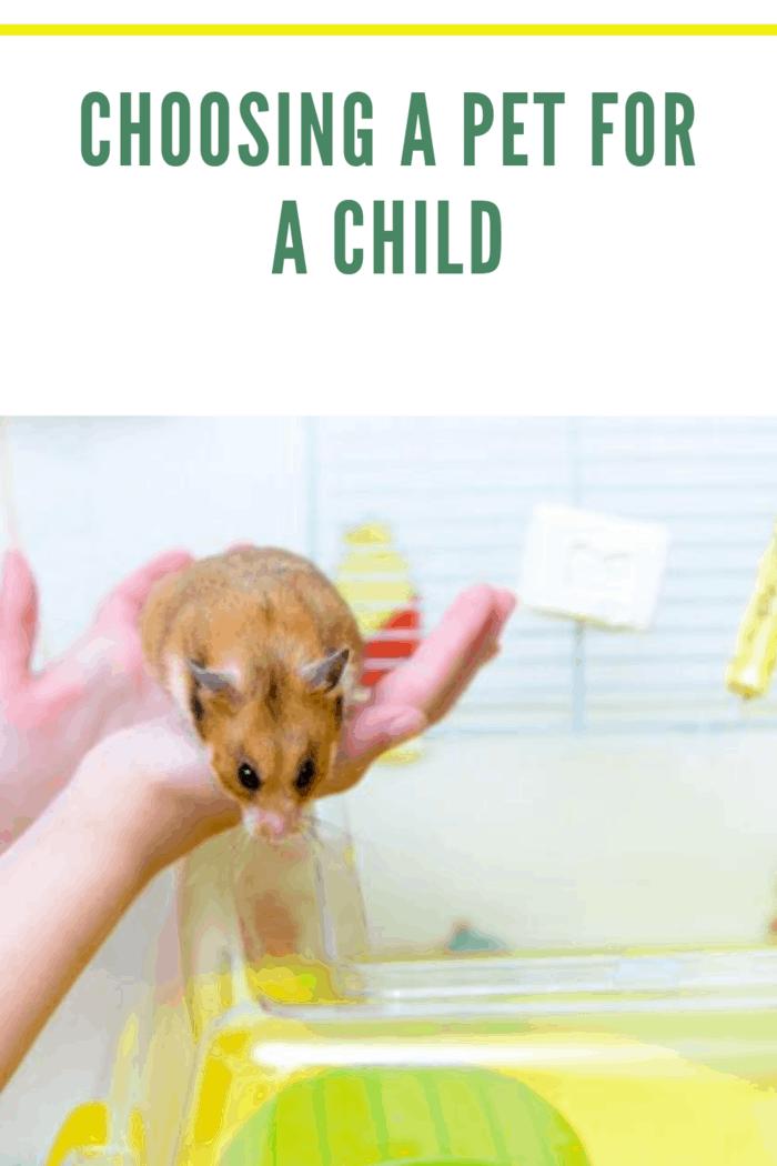 Red tame hamster in the hands of child @lusyaya / Freepik