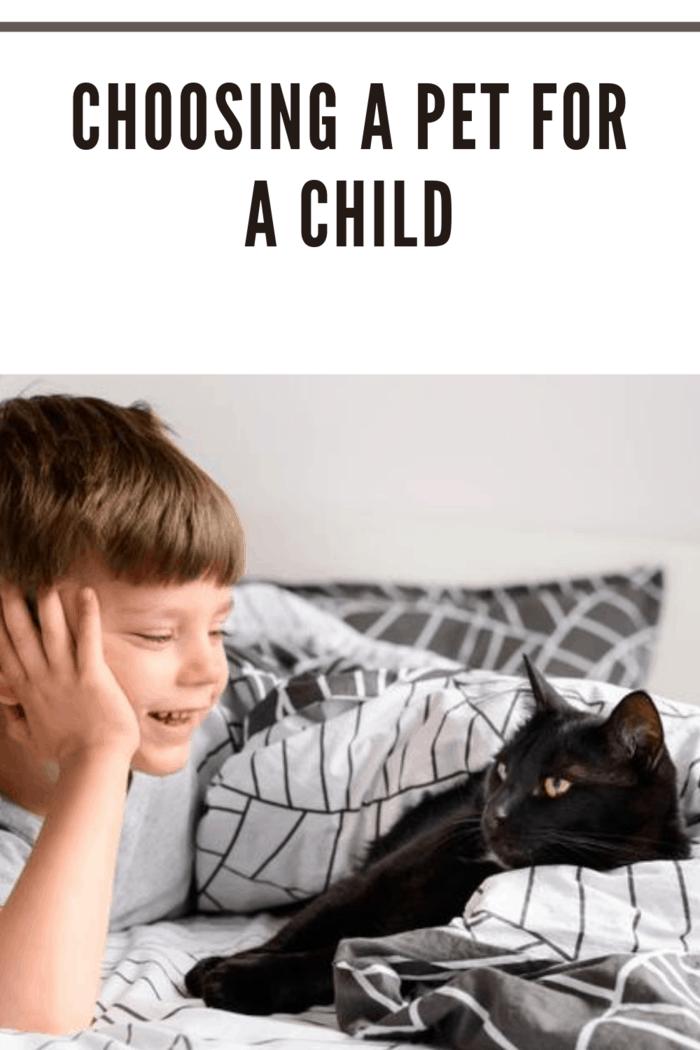 Cute little boy watching his cat
