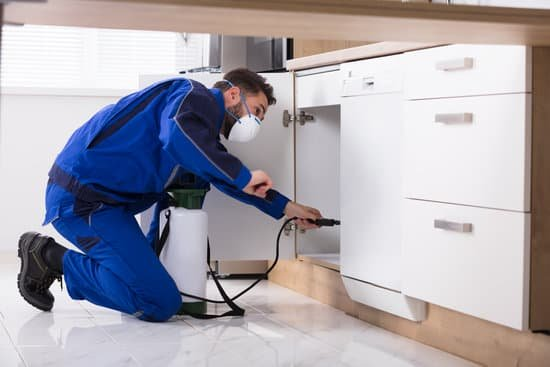 pest control spraying under and inside cabinets