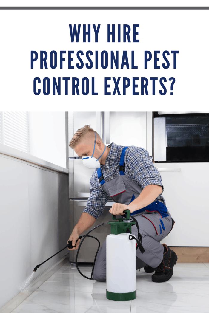 professional pest control expert spraying home