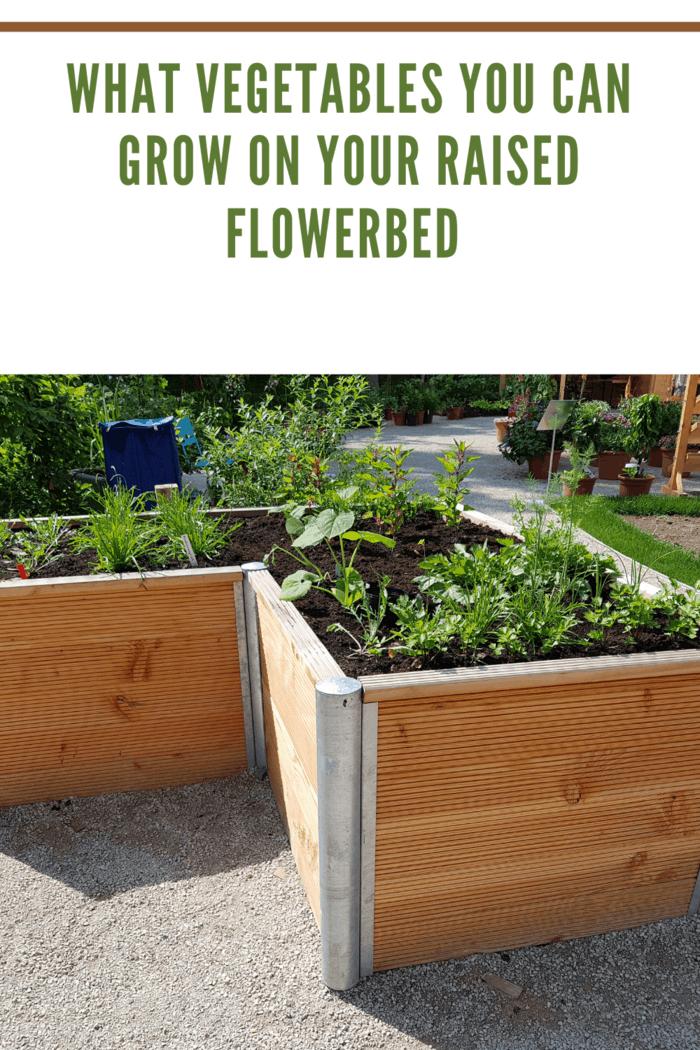 raised flower bed growing vegetables