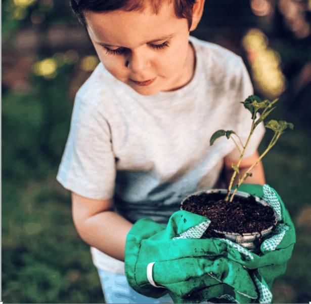 Child planting in backyard
