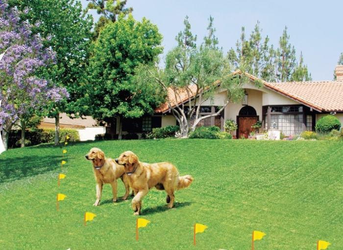 7 benefits of installing an underground dog fence