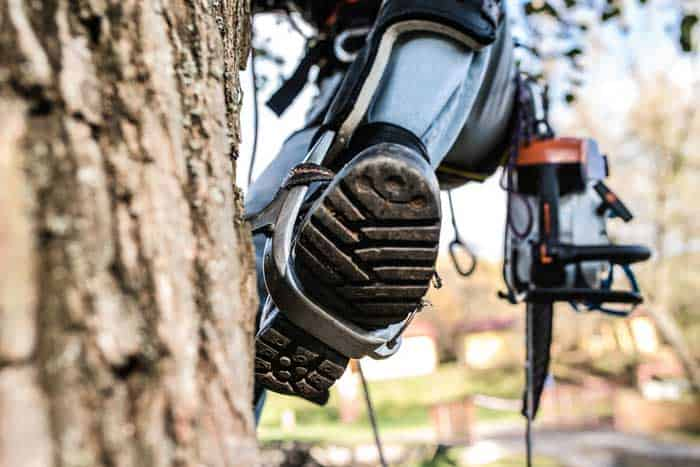 Close-up-of-leg-of-lumberjack-with-a-chainsaw-climbing-a-tree