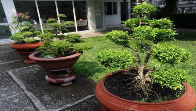 Museum Trees Your Solution to Landscaping Needs