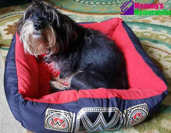 wwepet-bed with bailey mae looking up