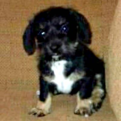 bailey as puppy