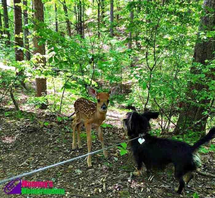 bailey mae with deer