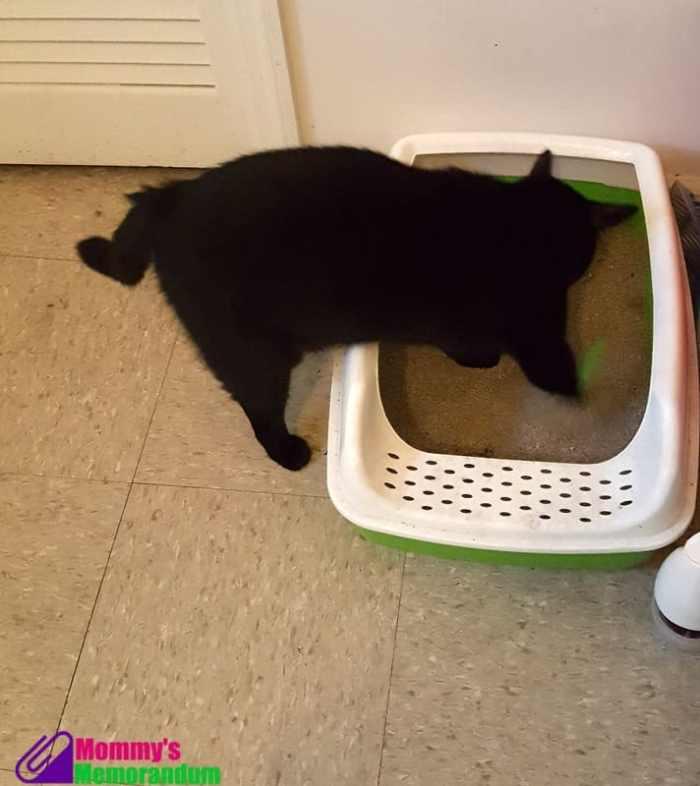 cats pride in litter box
