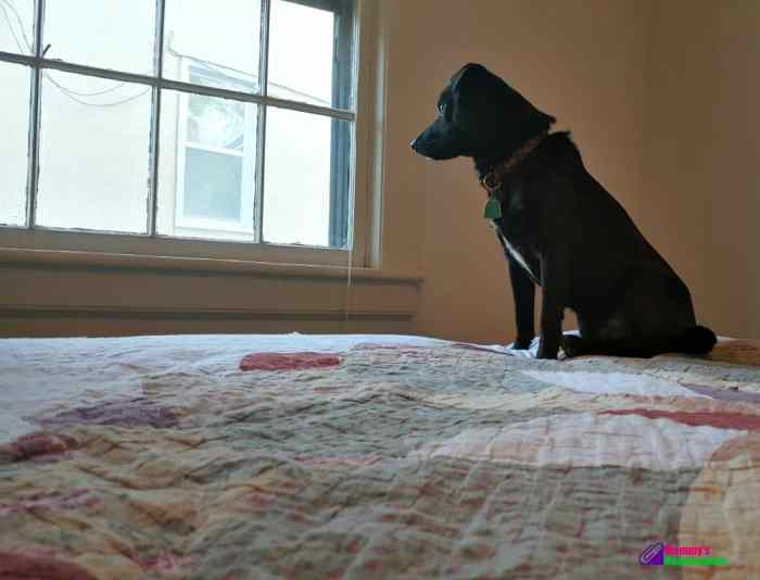 How to Protect Senior Dogs from Fleas and Ticks