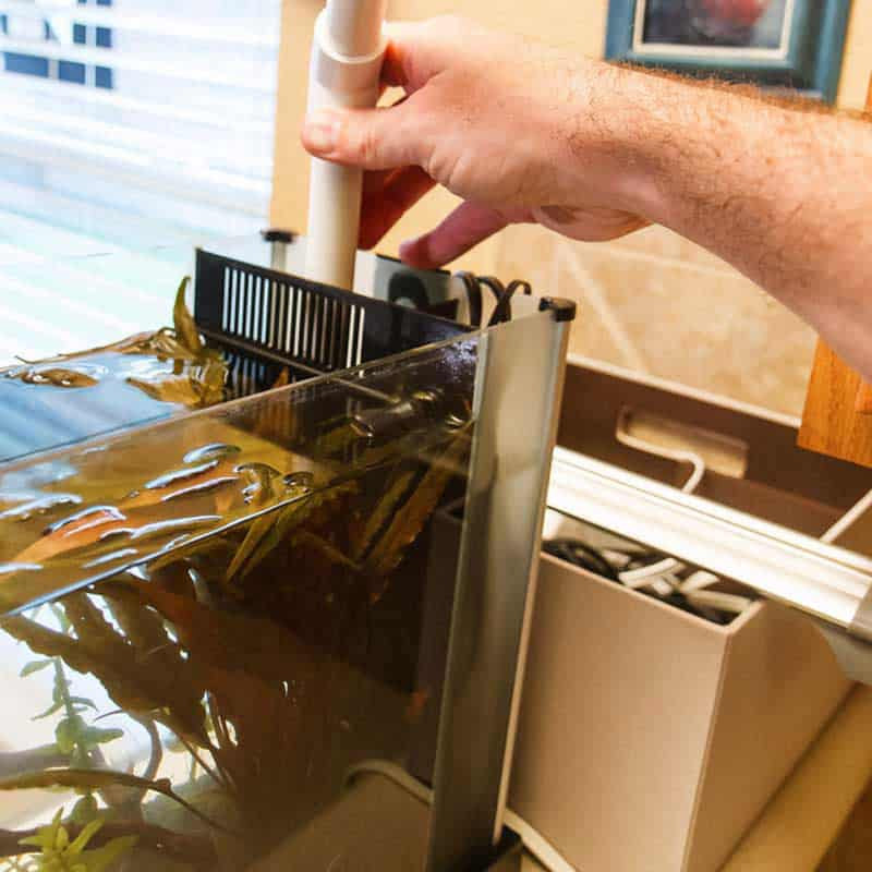 How to Clean a Fish Tank: Do it in Easy Steps