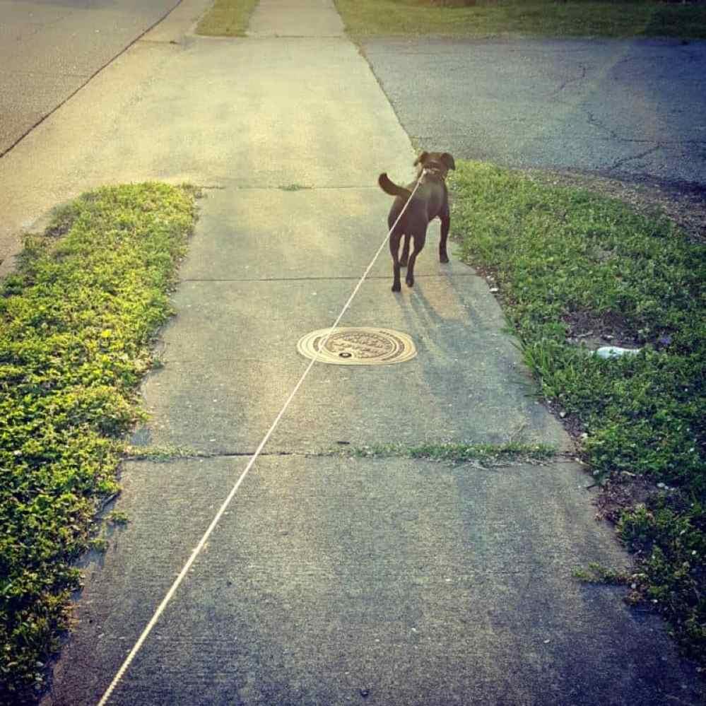 jeb on leash