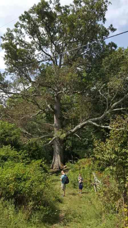 keffer-oak