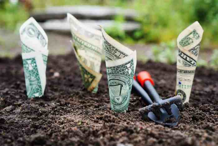 dollars rolled and planted in soil depicting managing finances to watch them grow.
