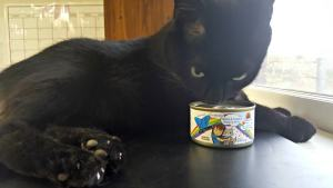 Is Your Cat Experiencing One of the Big 3 Cat Concerns?