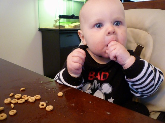 Yum, blueberries and cheerios for breakfast. (P.s. The blueberries are allready in his tummy...).