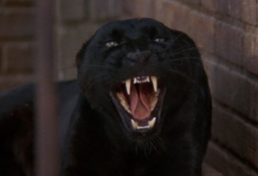 Cat_People(1982)_29
