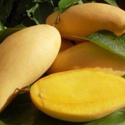 Honey Mango Fresh
