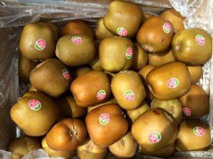 Red kiwifruit Selection