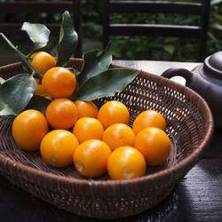 Kumquat Fruit Serving
