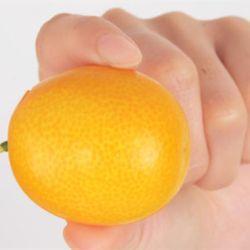 Kumquat Fruit Size