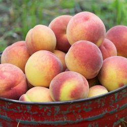 Sweet September Yellow Peach Basket